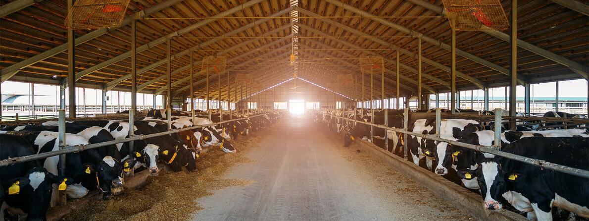 Digital-Technology-Farms